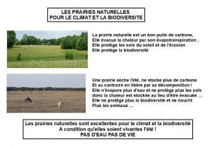 1_prairie naturelle